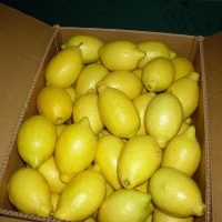 Fresh lemon offer from Egypt