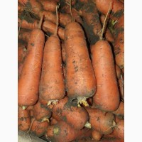 Продам моркву