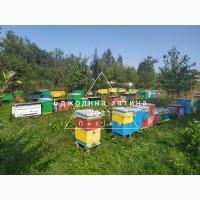 Бджолопакети карпатських бджіл з доставкою
