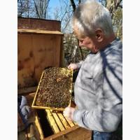 Продам бджолопакети з власної пасіки