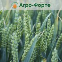 Озима Пшениця СКАГЕН (Еліта)