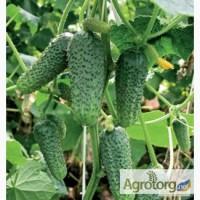 Продам по низким оптовым ценам семена Огурцов, Одесская обл