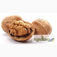 Компания Хорус Груп ТОВ купит грецкий орех в скорлупе 2017 года