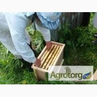 Продаю пчелопакеты Карпатка