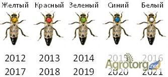 Фото 7. Бджоломатка Карпатка 2020 року ПЛІДНІ МАТКИ (Пчеломатка, пчелинные матки, плодные матки)