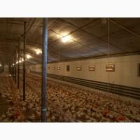 Охлаждение птичников, производственных помещений