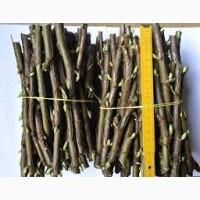 Саженцы черенки смородины черной только отборные, качество и сохранность сорта 100%