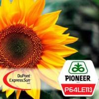 Подсолнечник Pioneer П64ЛЕ113 (P64LE113), ExpressSun