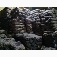 Продам перебранный товарный картофель от 4 до 5, 5 грн сорта : Лабелла, Оркестра, Курос