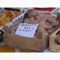 Продам семенной картофель