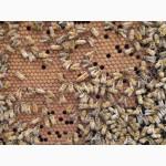 Продаем бджолопакеты с 25, апреля