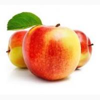 Купую Яблука (на переробку)