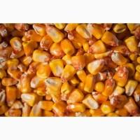 Продам кукурузу