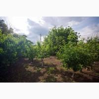Продам сладкий Миндаль, урожай 2021г