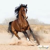 Закупаем лошадей живым весом, ДОРОГО