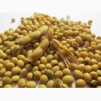 Срочно реализуем семена сои Аполло оптом
