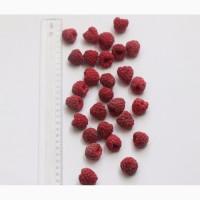 Продам малину самого высокого качества. Sell raspberries. The highest quality