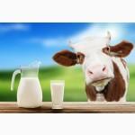 Закупаем коровье молоко оптом от 50 литров в день