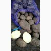 Продам посадочную картофель