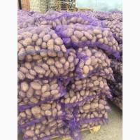 Продам белорусский картофель оптом