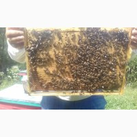 Бджолопакети Карпатка 2021, Закарпатська обл