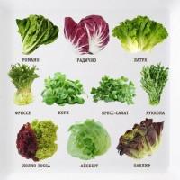 Куплю зелень, салаты и микрогрин