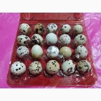 Продаем перепелиные яйца и мясо