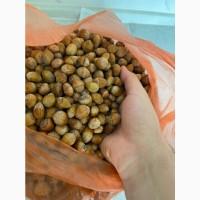 Лещина (дикий фундук) урожая 2020 сырой, идеальный в употребление и на посадку