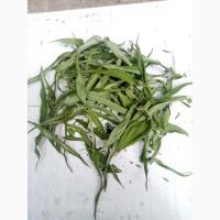 Продам иван чай(лист сухой) 100 грн за 1кг