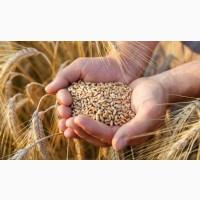 Купуємо пшеницю, ячмінь, ріпак