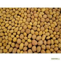 Покупаем картофель в Харьковской области