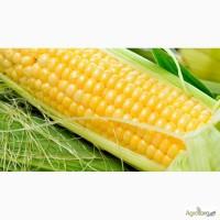 Куплю кукурузу дорого ГОСТ