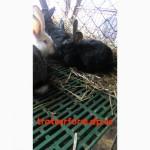 Продам платиковый настил для кроликов
