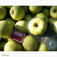 Яблоко из сада Голден Делишес, Симиренко