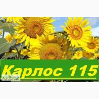 Компания «ГРАН» предлагает семена подсолнечника «Карлос 115» 115дн. Под. евро-лайтинг