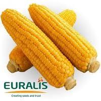Евралис семена подсолнечника и кукурузы