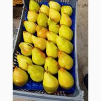 Продаем груши