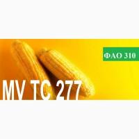 Продам семена кукурузы венгерской селекции Mv 277 (ФАО 310)
