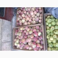 Продажа оптом 2-х тонн яблок 1 сорт. Флорина