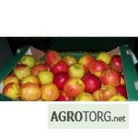 Продам яблоки сорта JONAGOLD и других сортов (под заказ)