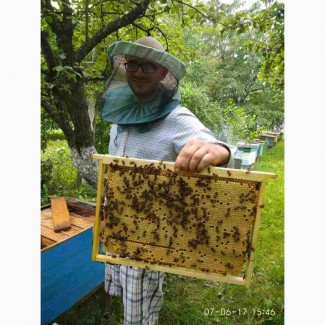 Бджолопакети, Пчелопакеты на 2018 год карпатка-с Доставкой