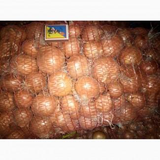 Продается лук репчатый зимний