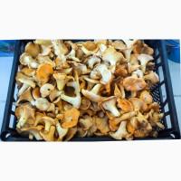 Продаем свежие и сушеные лисичку и белые грибы