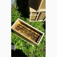 Продам пчелопакеты карпатской породы вучковский тип с Доставкой по Украине 2019