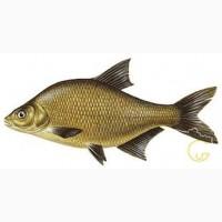 Покупаем на постоянной основе речную, ставковую рыбу. Возможен самовывоз. Опт