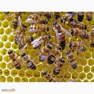 Продам пчелосемьи (Продам бджолосім#039;ї )