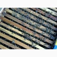 Продам бжджолосімї, бджоли, пасіка