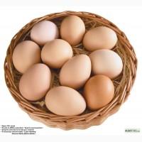 Продам яйцо гусиное.
