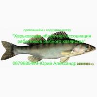Приглашаем к сотрудничеству рыбные хозяйства