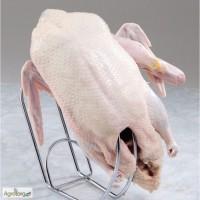 Продам м#039;ясо гуски